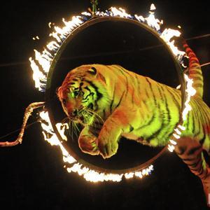 Цирки Рязани