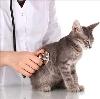 Ветеринарные клиники в Рязани